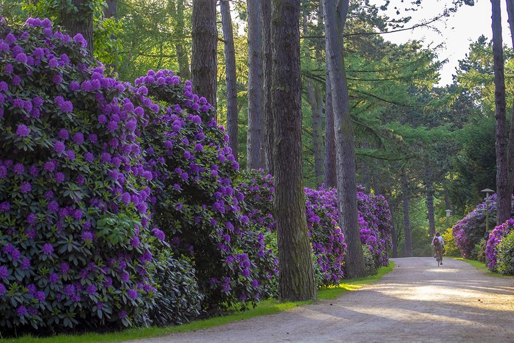 Stadtpark Blüte